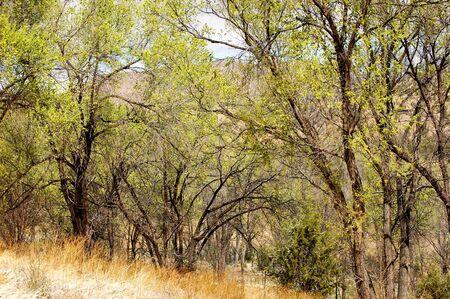view through: Mountain view through the trees Stock Photo