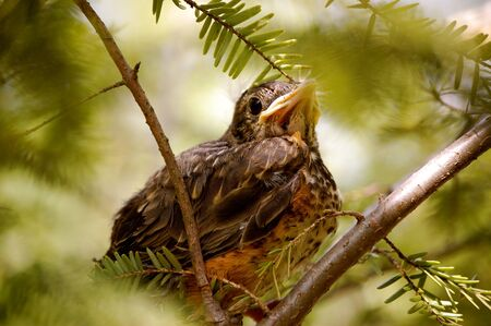 Baby Bird sits on branches Imagens