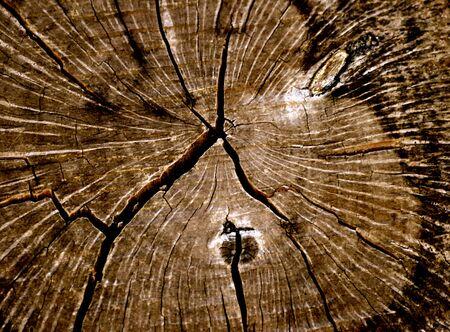 Textuur boom ringen