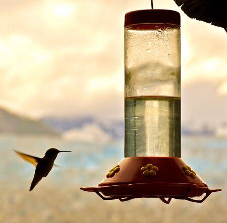 feeder: Hummingbird and feeder Stock Photo