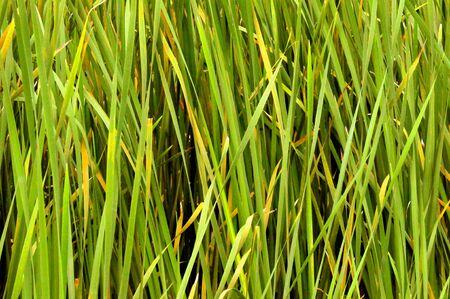 In the weeds Stok Fotoğraf