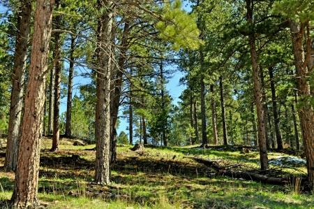 Black Hills South Dakota Standard-Bild