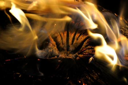 embers: Campfire Embers