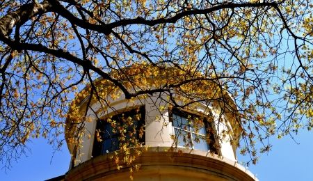 Georgetown Texas architecture and tree