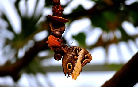 Butterfly on food  Фото со стока
