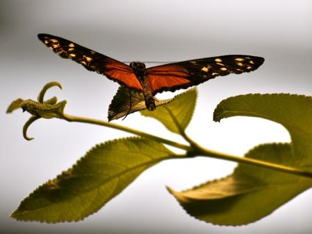 Butterfly on leaf 版權商用圖片 - 21940750