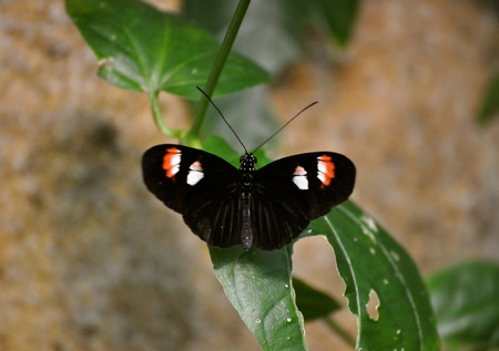 Butterfly on leaf 版權商用圖片 - 21940760