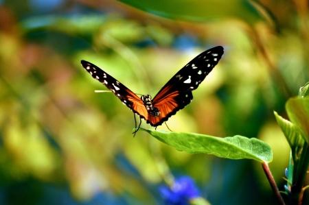 Butterfly on leaves 版權商用圖片