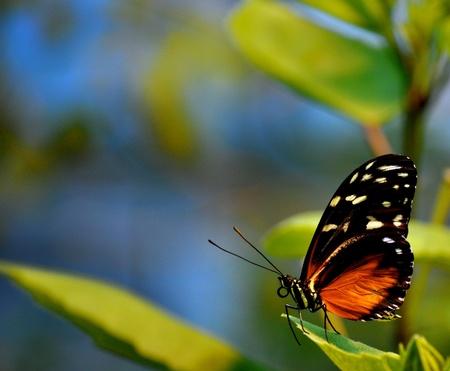 Butterfly on leaves 版權商用圖片 - 21940775