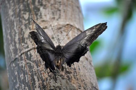Butterfly on limb  Фото со стока