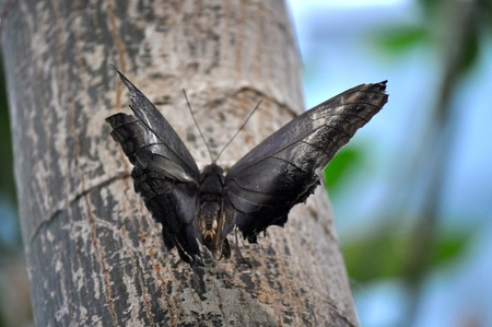 Butterfly on limb 版權商用圖片 - 21940777