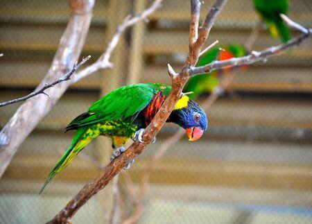 Parakeet on branch Фото со стока
