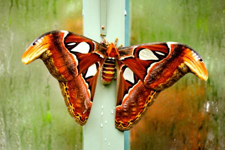 Papillon vivant dans un sanctuaire de papillon Banque d'images - 35534233