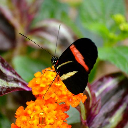 Papillon vivant dans un sanctuaire de papillon Banque d'images - 35534300