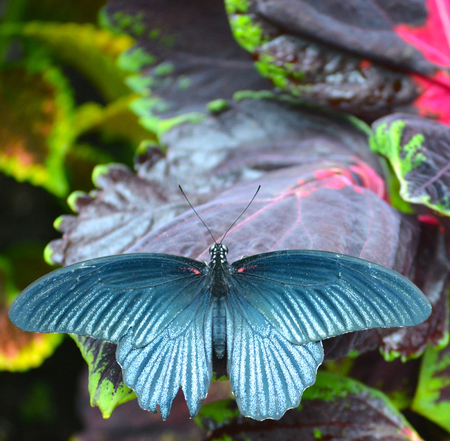 Butterfly living in a butterfly sanctuary