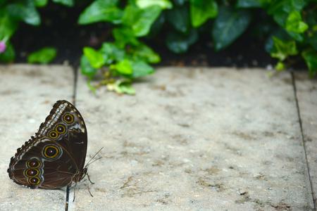Papillon vivant dans un sanctuaire de papillon Banque d'images - 35534464