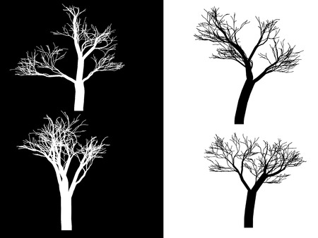 Illustration, trees isolated on a black and white background