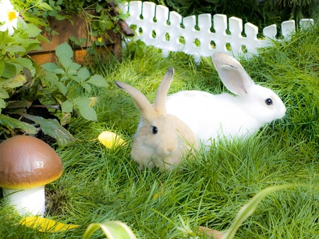 Two rabbits on green, juicy herb near by mushroom Stock Photo