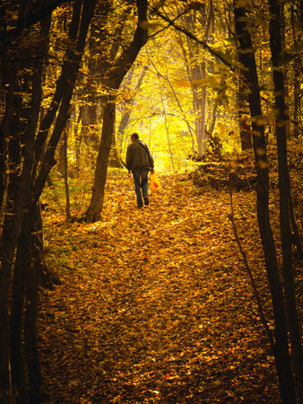 Man walking along in forest in sunny autumn day