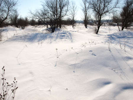 The nature - primordial, the sun, the sky, trees of a birch, a snow on branches