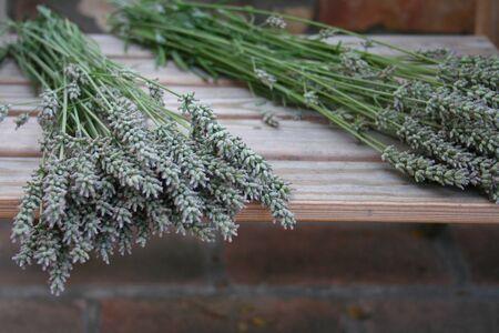 lavanda: Lavender, Lavanda, lawenda Stock Photo