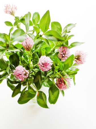 Clover leaves and flowers on white wooden background. Shallow dof.
