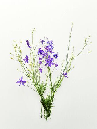 Delphinium flowers on white wooden background. Shallow dof.