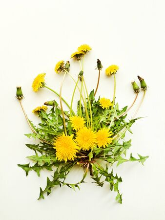 Dandelion fresh leaves with flowers on white wooden background. Shallow dof. Stock Photo