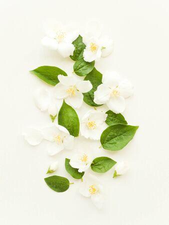 Jasmine flowers and petals background. Shallow dof.