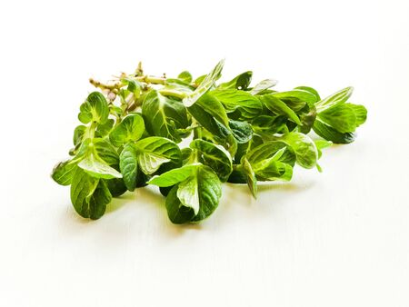 Baby mint herb on white wooden background. Shallow dof. Stock Photo