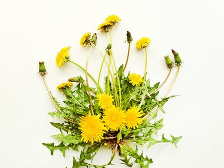 Dandelion fresh leaves with flowers on white wooden background. Shallow dof.