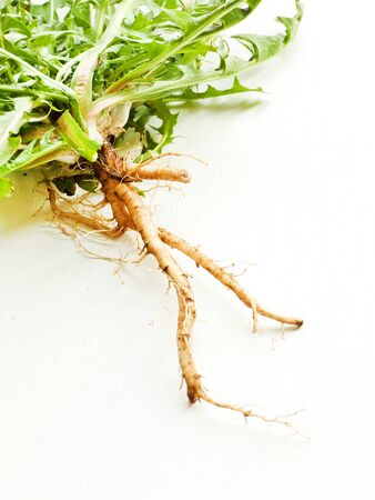 Dandelion fresh leaves with roots on white wooden background. Shallow dof.