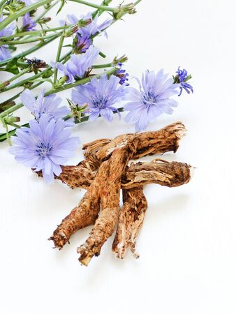 Chicory on white wooden background. Shallow dof.