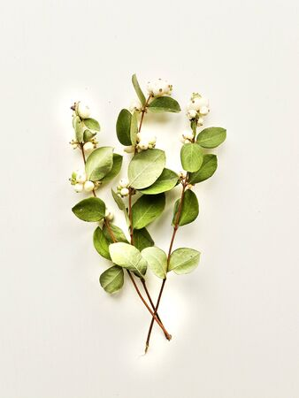 Mistletoe branches with berries on the wooden