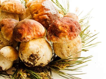 Fresh Boletus edulis or Cep, Porcini mushrooms on the wooden background/ Shallow dof. Stock Photo