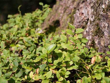 shrubbery: Close up of young shrubbery growing at a tree