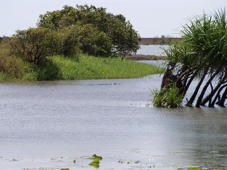 lurk: Crocodiles in the Northern Territory in Australia
