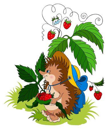 wild strawberry: Cute young hedgehog