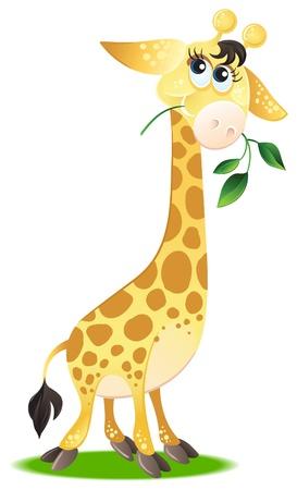 jirafa cute: Jirafa. Linda car�cter animal para su dise�o