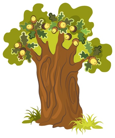Oak tree. Scenic tree for your design Vector