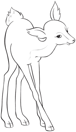black tail deer: Beautiful cartoon deer. Coloring page. Also available colored version