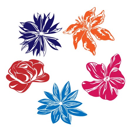Five nice multi-colored vector flowers