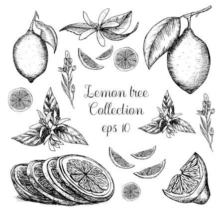 Hand drawn lemon tree collection