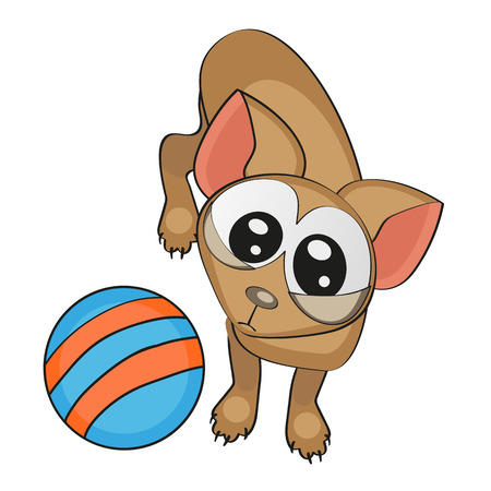 lap dog: Cane con palla isolato su sfondo bianco
