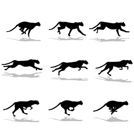 jaguar: imágenes del guepardo corriendo Vectores