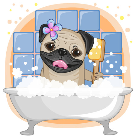 wet cleaning: Cute cartoon Pug Dog in the bathroom Illustration