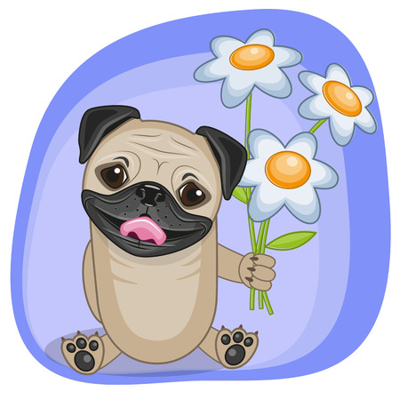pug dog: Greeting card Pug Dog with flowers