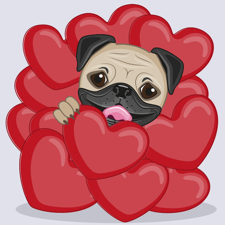 pug dog: Valentine card with Pug Dog in hearts