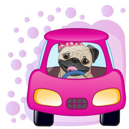 Niedliche Mops-Hund Mädchen in einem Auto sitzen