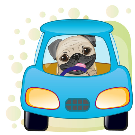 pug dog: Cute Pug Dog is sitting in a car Illustration